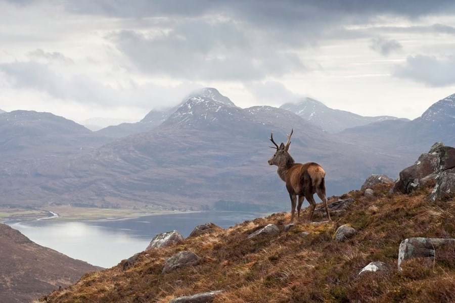 Stalking in the Highlands is an unforgettable experience