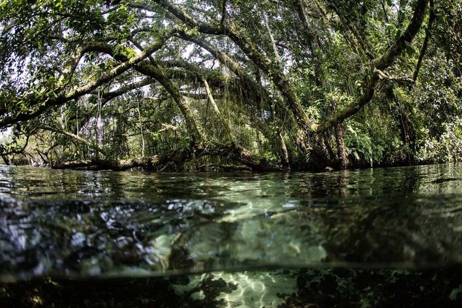 Kayak through the mangroves of the Solomon Islands