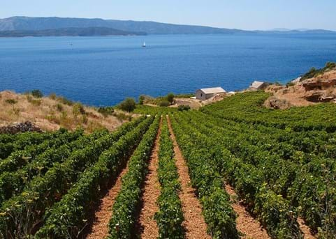 8 delicious coastal vineyards