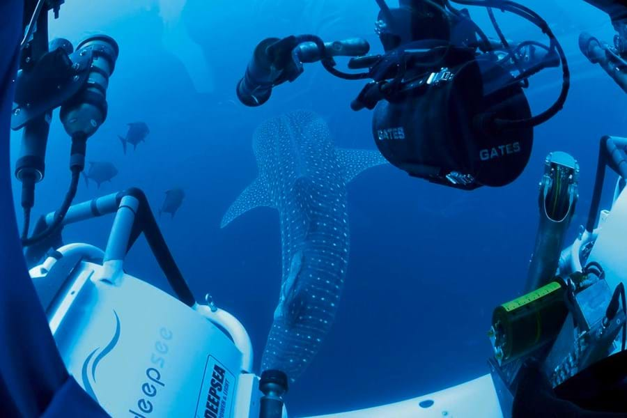 A unique view of the world's largest, and possibly more graceful, fish, the whale shark