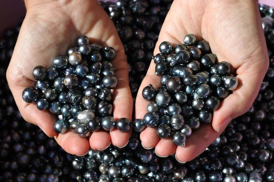 Black pearls from French Polynesia